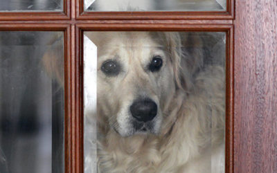 Pets: The Secret to Finding the Right Security System