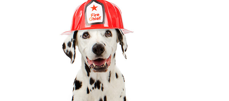Pet Fire Safety: Protecting Fido and Felix